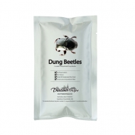 Edible Buffalo Dung Beetles