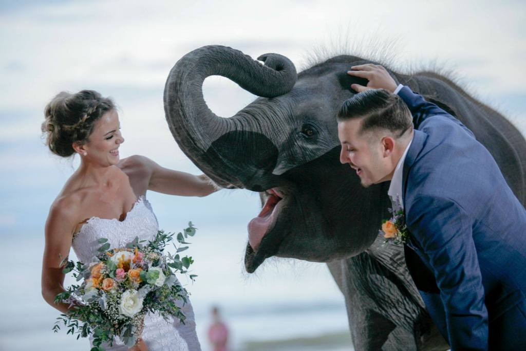 thailand baby elephant wedding