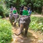 Elephant Trekking and Safari