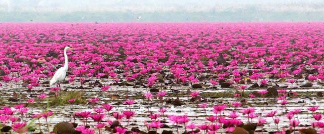 Beautiful Pink Lakes