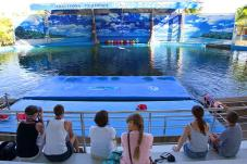 dolphin_world5