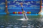 dolphin_world6