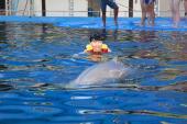 dolphin_world7