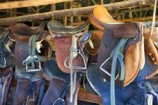 horse_riding2