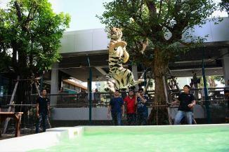 tiger-7