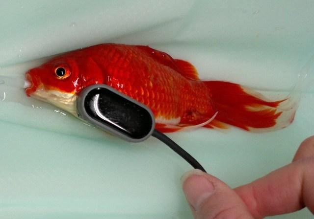fish2 - Brain Salad Surgery and the CAT Doppler