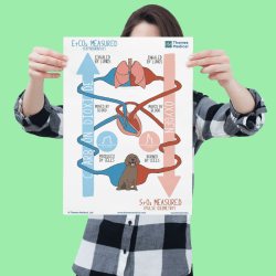 mockup of a woman holding a poster against a customizable background 1323 el - Respiratory Process Poster