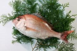 sea bream for Tai Meshi recipe
