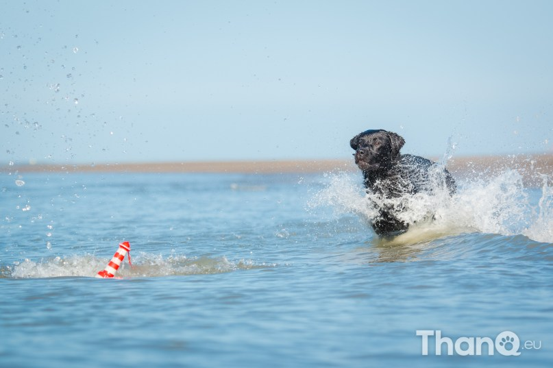 Fotoshoot Mylie (Labrador) en Mellow (Border Collie)