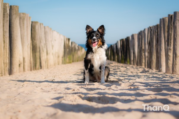 Jake in Domburg