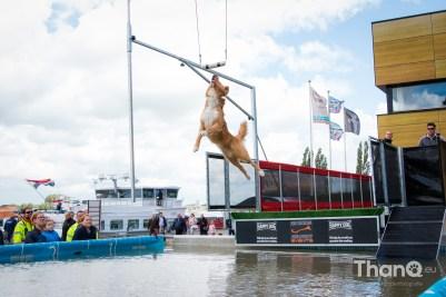 Dock Diving Havendag Werkendam