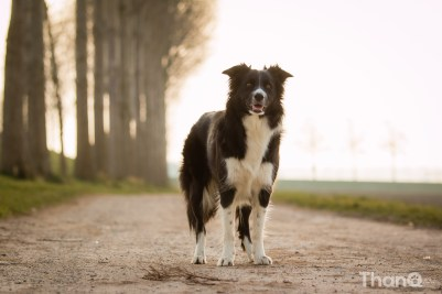 Border collie Fenna in Goese Polder Park