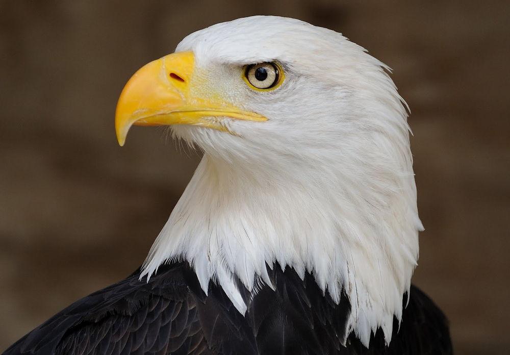 حلل شخصيتك الأن من الطيور التي تحبها