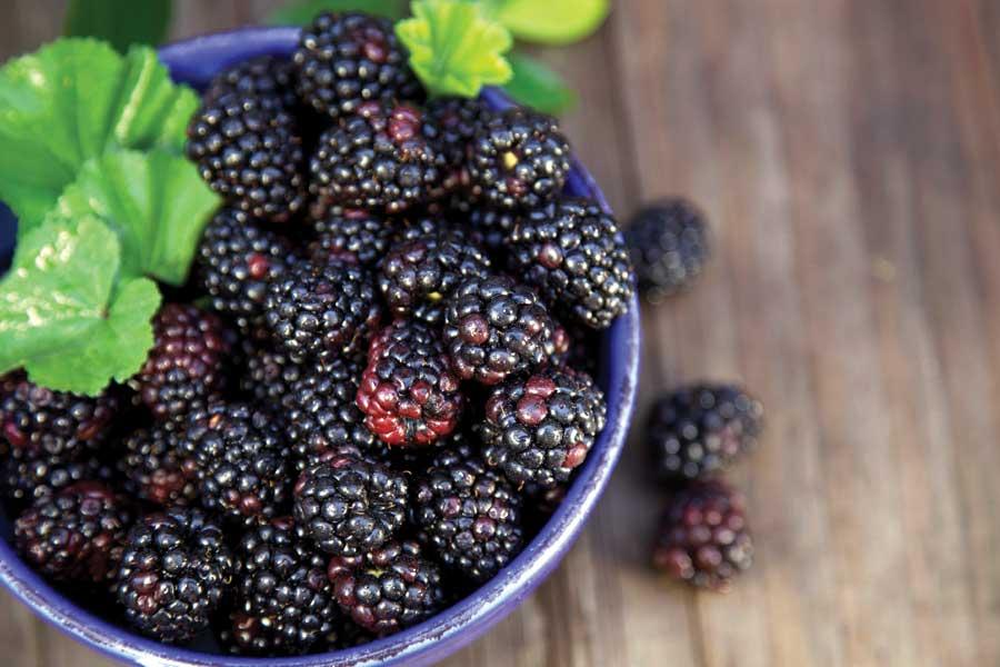 Blackberry Black Wallpaper فوائد التوت الأسود ثقف نفسك