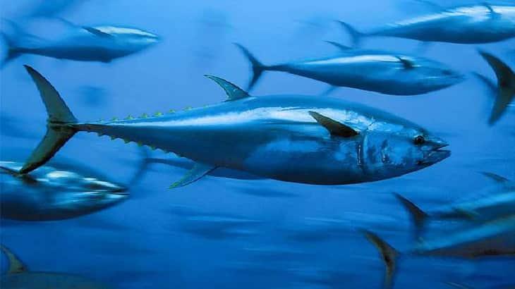 تفسير حلم رؤية السمك في المنام