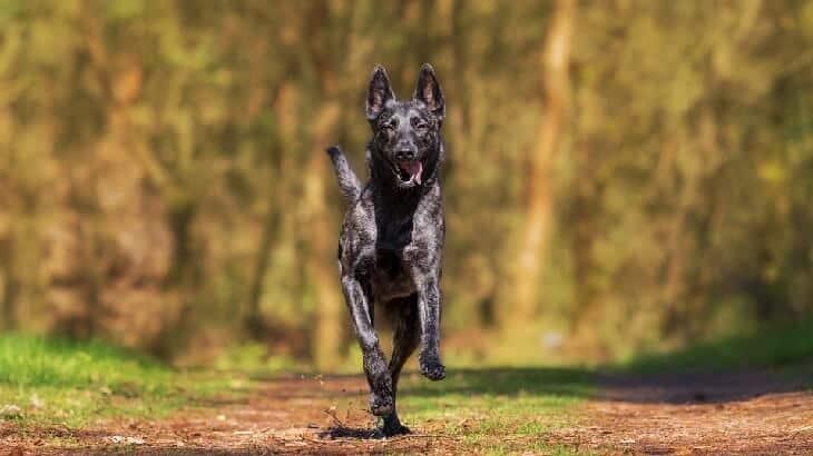 تفسير رؤية الكلب في المنام ومعناه معلومة ثقافية