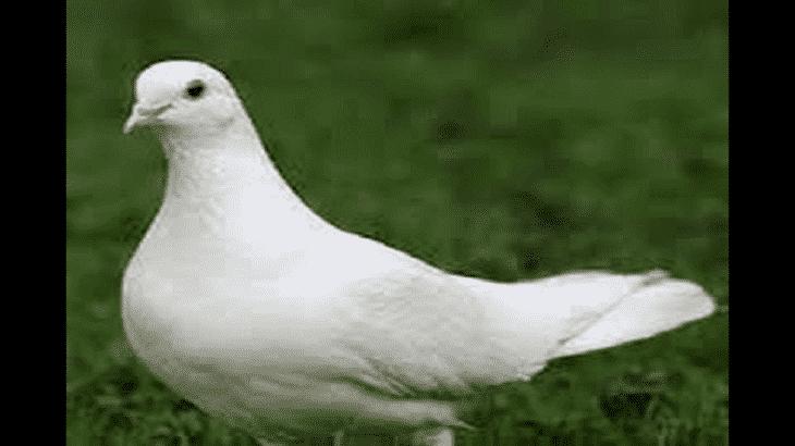 موضوع تعبير عن السلام العادل وأهميته للشعوب