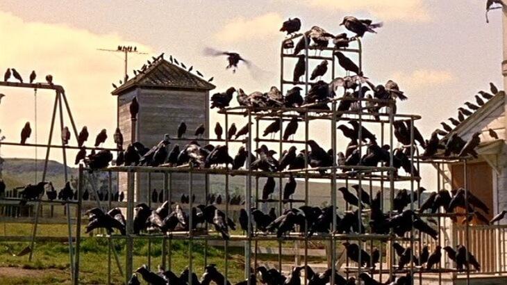 موضوع تعبير عن الطيور وما نتعلمه منها بالعناصر