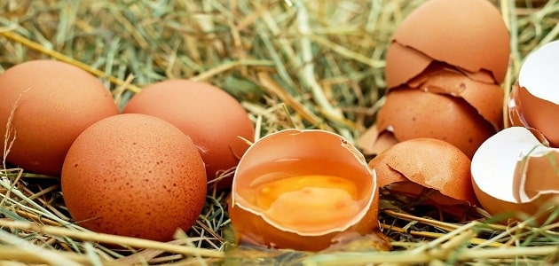 The most important benefits of municipal eggs for children The most important benefits of municipal eggs for children