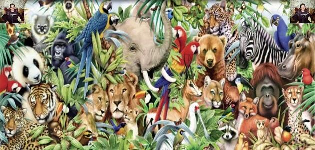 معلومات هل تعلم عن الحيوانات معلومة ثقافية