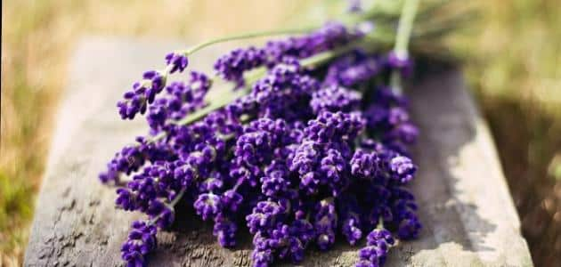 What is the benefit of lavender What is the benefit of lavender