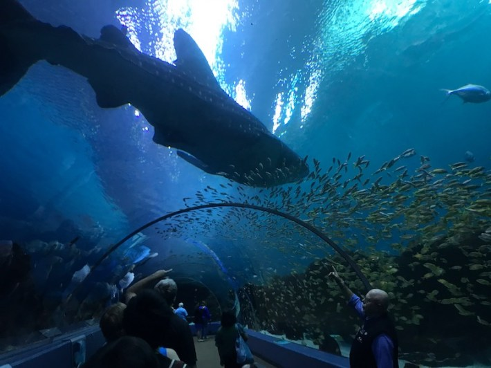 Under the Sea at the New St. Louis Aquarium - thatawaydad.com