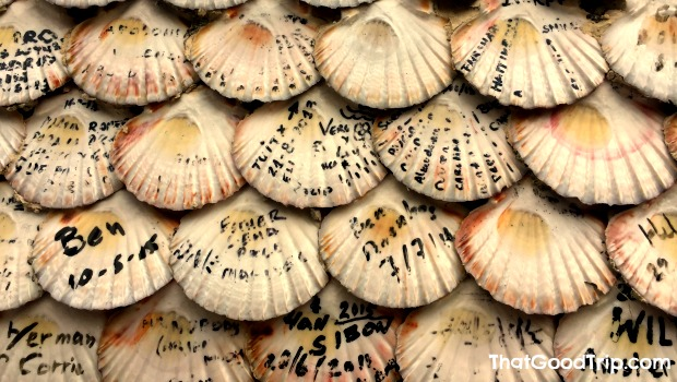 Conchas do Caminho Português
