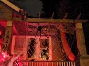 Spiderweb and victim!