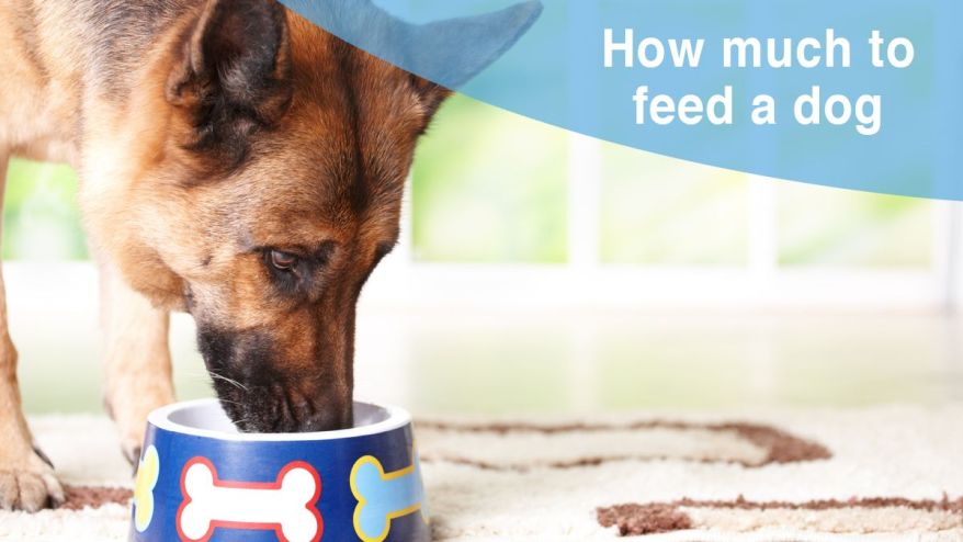 How to feed a dog