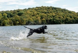 10 Things to Do With Your Dog This Summer