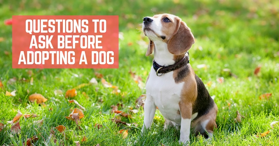 Question to Ask Before Adopting a Dog  ThatMuttcom