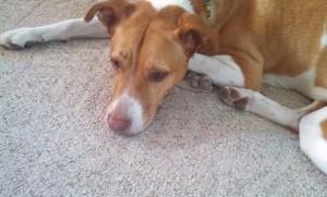 Should I have my dog spayed?