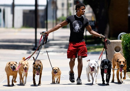 Walking 7 dogs at once