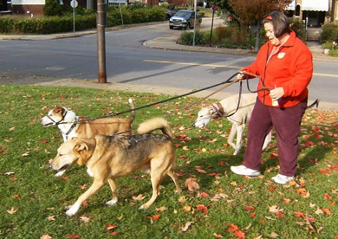 Don't walk three dogs in front of you