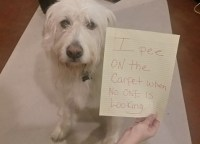Dog Shaming (10 photos) - ThatMutt.com: A Dog Blog