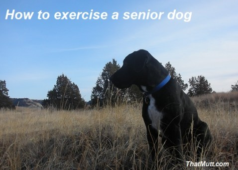 Exercise a senior dog