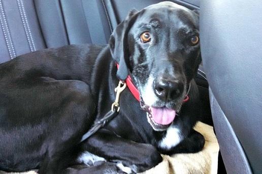 Leave dog alone in car