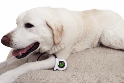 Dog using Assisi Loop 2.0