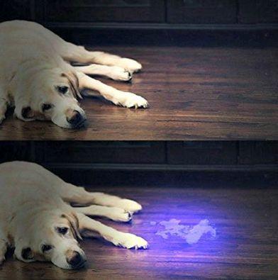 RAVPower UV light for pet stains