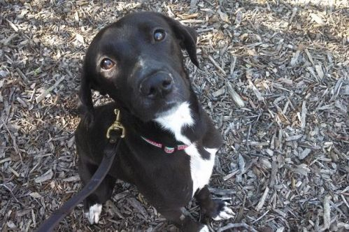 Lana my foster dog with kennel cough
