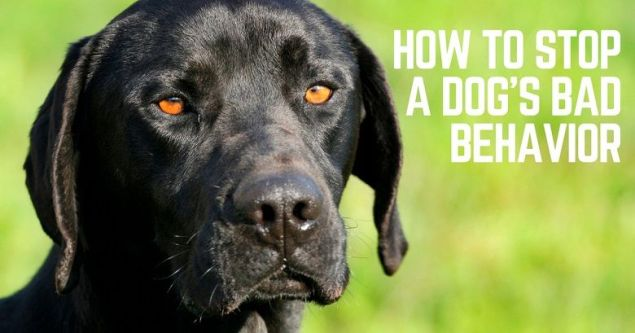 How to stop a dog's bad behavior