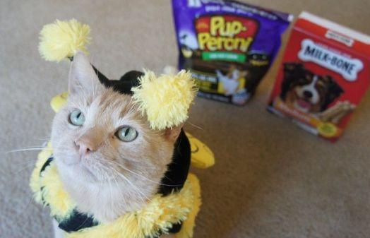 Beamer the bee