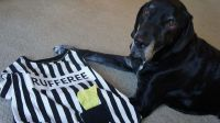How to Get Your Dog To Love His Halloween Costume Using ...