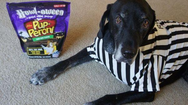 Dog Rufferee costume (2)