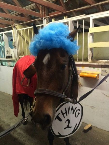 Horse dressed as Thing 2