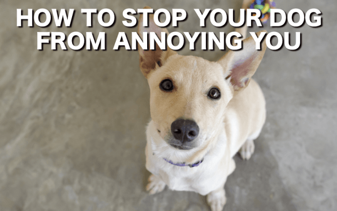 How to stop your dog from pawing at you