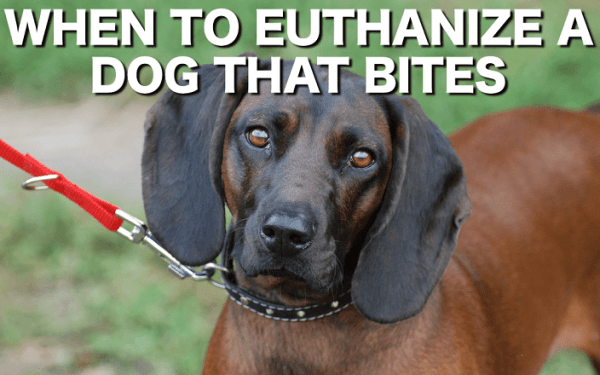 When to euthanize a dog that bites