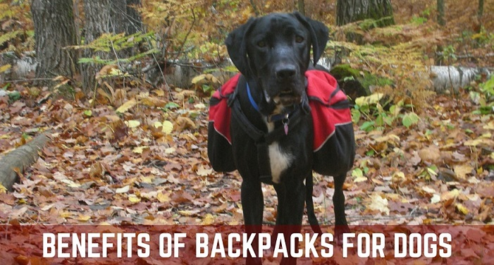 Benefits of backpacks for dogs