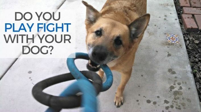 Do you play fight with your dog