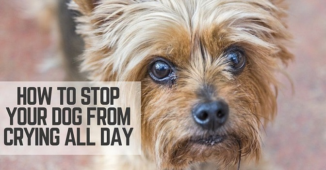 Stop Your Dog From Crying All Day - ThatMutt com